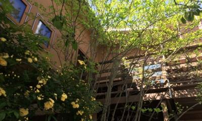 小さな家~緑の中で暮らす木のアトリエ付住宅~ (敷地のオープンスペースを有効に使う)