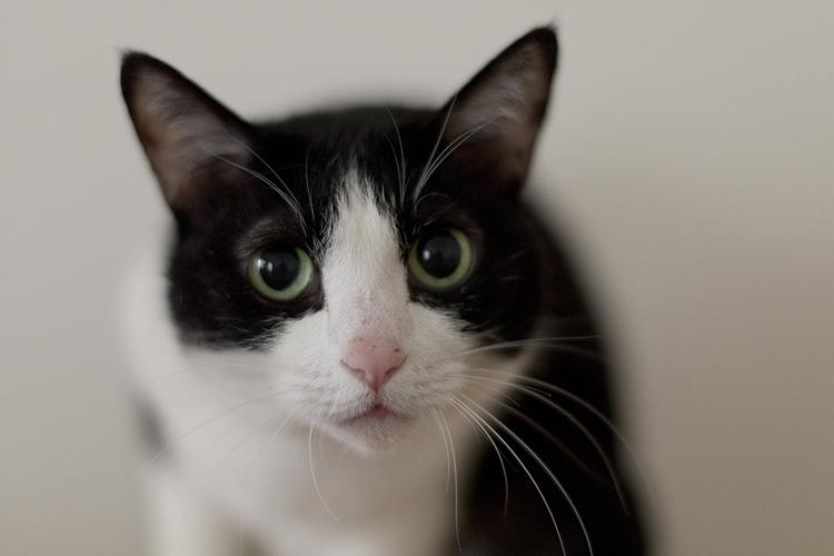 兵庫県U邸の部屋 ペットの猫ちゃん