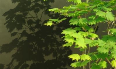 gardenM (gardenM3)