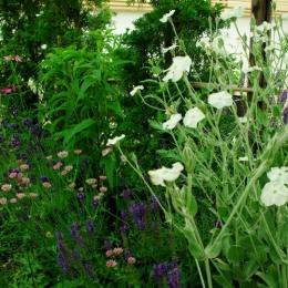 gardenM (gardenM4)