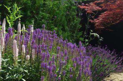 gardenM (gardenM14)