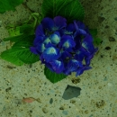 gardenN2