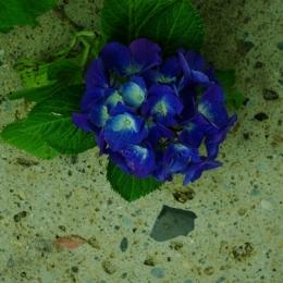 gardenN (gardenN2)
