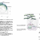 Transitory Garden2