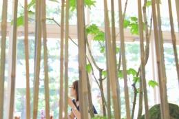Transitory Garden (Transitory Garden3)