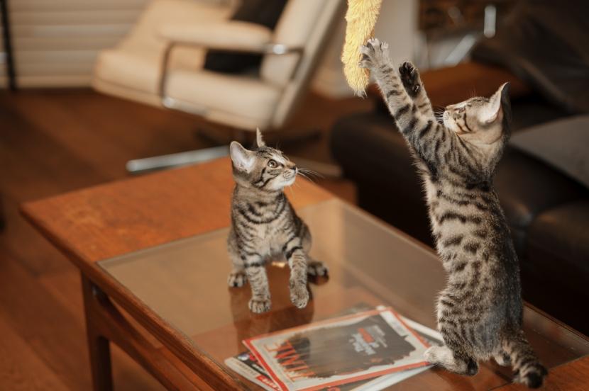 S邸・上品に味わい深く住まうの写真 ペットのネコちゃん