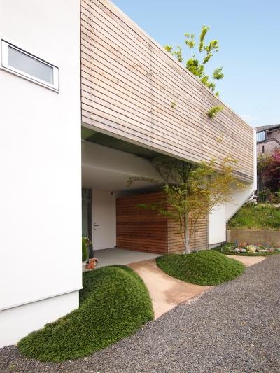 南側アプローチから見た外観 (ふたつの木の家 〜常に家族を見守る2つのシンボルツリー〜)