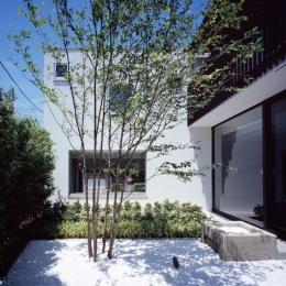 スキマのある家 (メインツリーと雨受けがある大谷石の中庭)