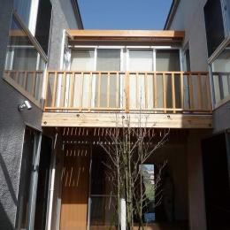 銚子の家 (中庭に植えられたヤマボウシ)