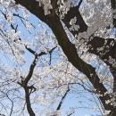 桜テラスの写真 桜テラス 外観