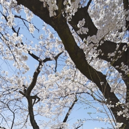 桜テラス (桜テラス 外観)