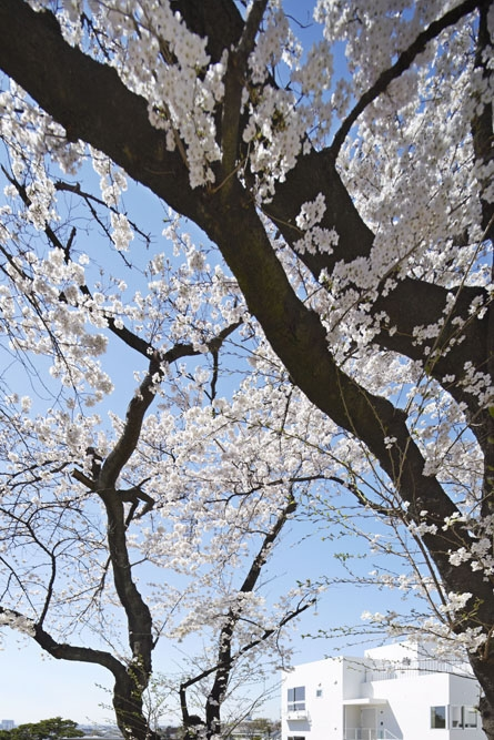 桜テラスの部屋 桜テラス 外観