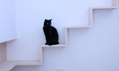 ネコと犬と暮らす家・二世帯住宅OUCHI-14 (ネコ階段)