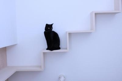 ネコ階段 (ネコと犬と暮らす家・二世帯住宅OUCHI-14)