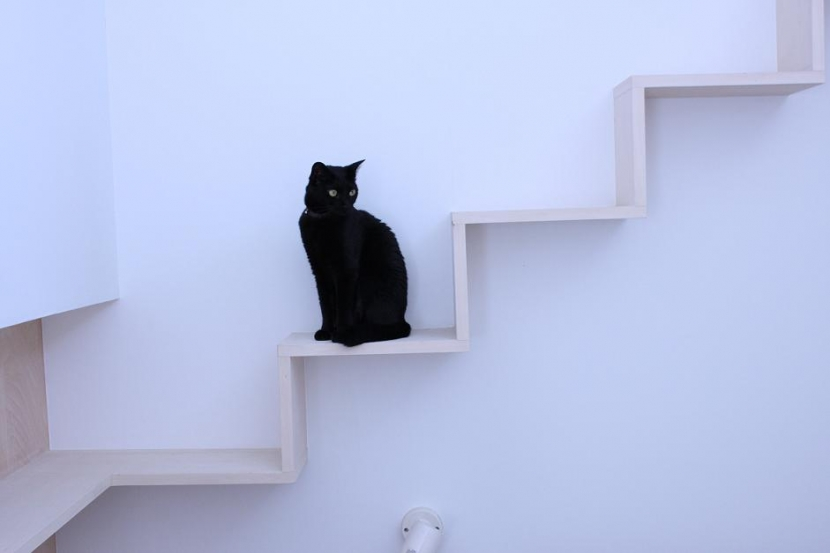 石川淳「ネコと犬と暮らす家・二世帯住宅OUCHI-14」