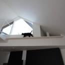 ネコと犬と暮らす家・二世帯住宅OUCHI-14の写真 猫のためのキャットウオーク