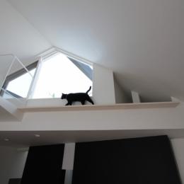 ネコと犬と暮らす家・二世帯住宅OUCHI-14 (猫のためのキャットウオーク)