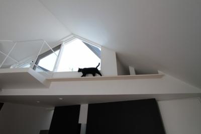 猫のためのキャットウオーク (ネコと犬と暮らす家・オウチ14)