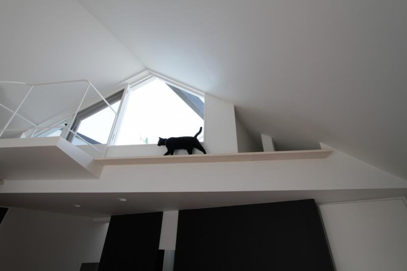 建築家:石川淳「オウチ14・ネコと犬と暮らす家」