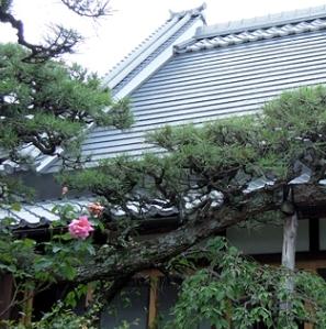 押熊の家の部屋 屋根