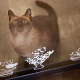 白いモルタル塗装はカフェよりカフェに?!人も集まり、猫も気持ちよくなるリノベーション (廊下)