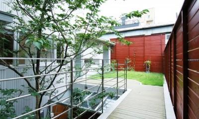 浅草の家―2階にある庭 (居間から2階の庭を見る)