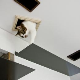 猫と共存する家-ステップ