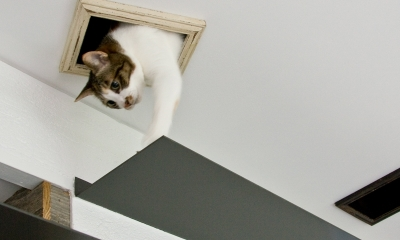 猫と共存する家 (ステップ)