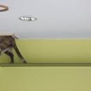 猫と共存する家の写真 ステップ