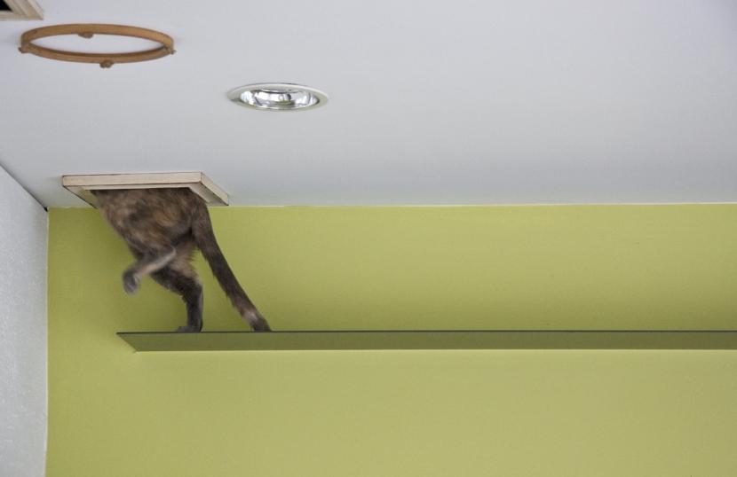 中西 宗平「猫と共存する家」