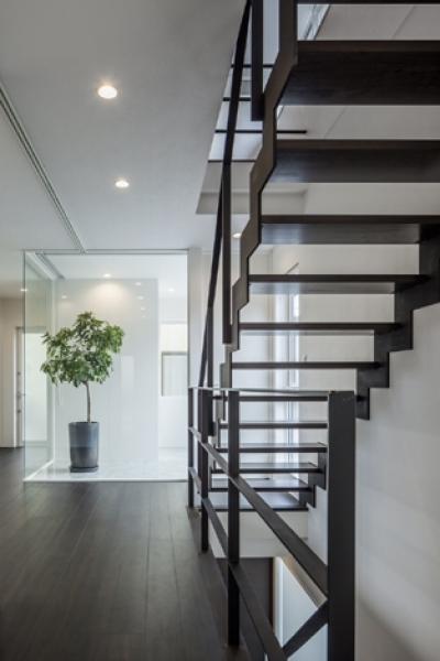 階段2(撮影:藤村泰一) (卯之町の家)