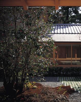 藪椿の家の部屋 中庭の藪椿
