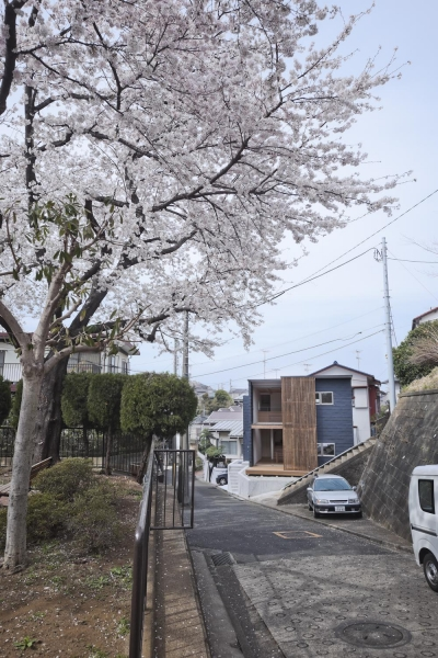 桜テラスの家 (桜テラスの家(撮影:Tomohiro Sakashita))