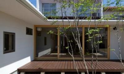 平屋のコートハウス (中庭越しにリビングを見る1)