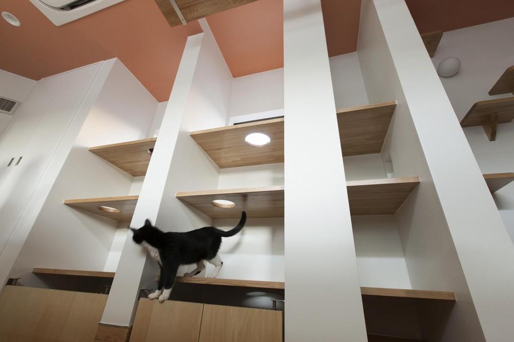 T-OFFICE (猫部屋)