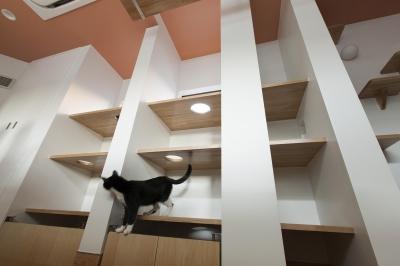 猫部屋 (T-OFFICE)