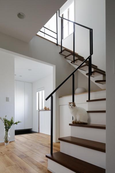 階段 (図書室階段でアカデミックに)
