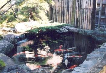 坂東邸の部屋 鯉が泳ぐ池