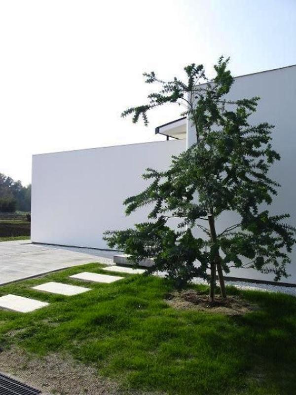 陽だまりの舎の部屋 シンボルツリー