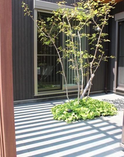 囲みの家の写真 住まいの中心となる中庭