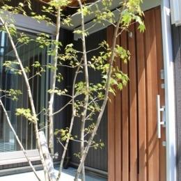 囲みの家 (玄関)