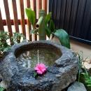 和室から見える水庭