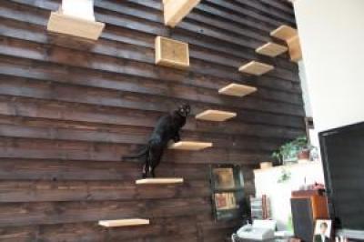 新琴似K邸―庇のある家― (猫階段)