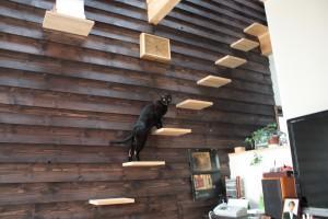新琴似K邸―庇のある家―の部屋 猫階段