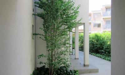 緑に囲まれた集合住宅|Apartment-Fu・路地状敷地の長屋建て集合住宅