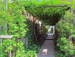 Apartment-Fu・路地状敷地の長屋建て集合住宅 (緑のトンネル)