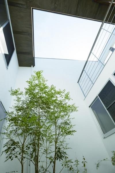 鎌倉の家 旗竿敷地に建つ中庭のある家 (立体的な外部をつくる中庭とテラス)