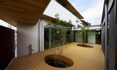 中庭を回遊する家 (中庭)
