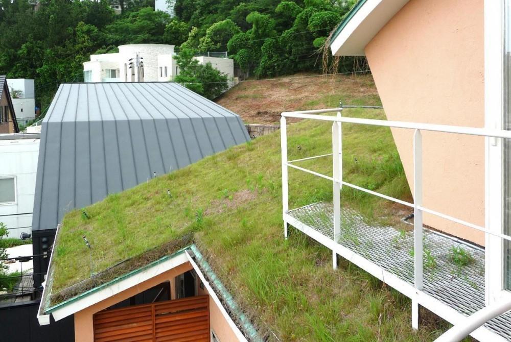 屋上緑化 (住まう人と共にリズムを刻む家)