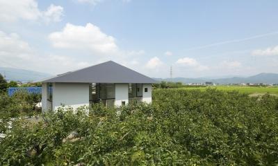 柿畑に囲まれた家